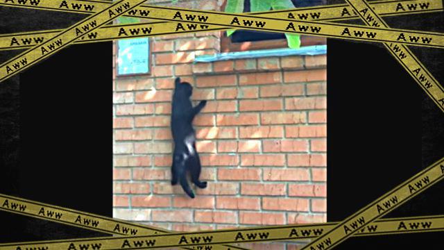 spidercat2-frame