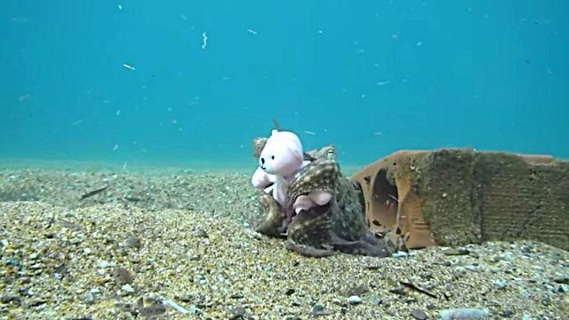 teddynoctopus6