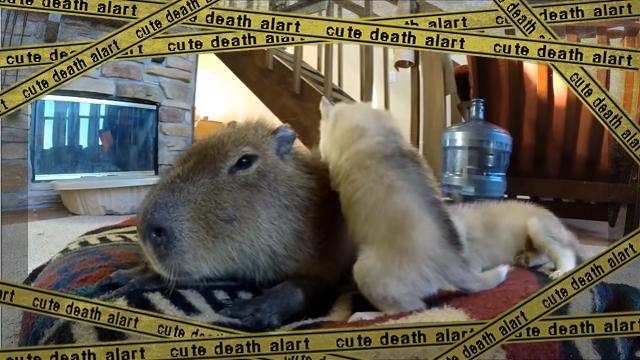 kapibara [www-frame