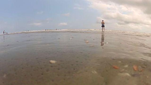 beachclam2