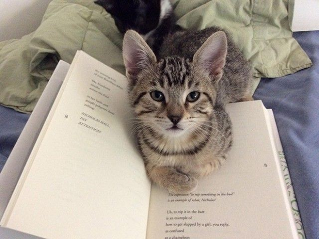 cats-vs-reading3_e