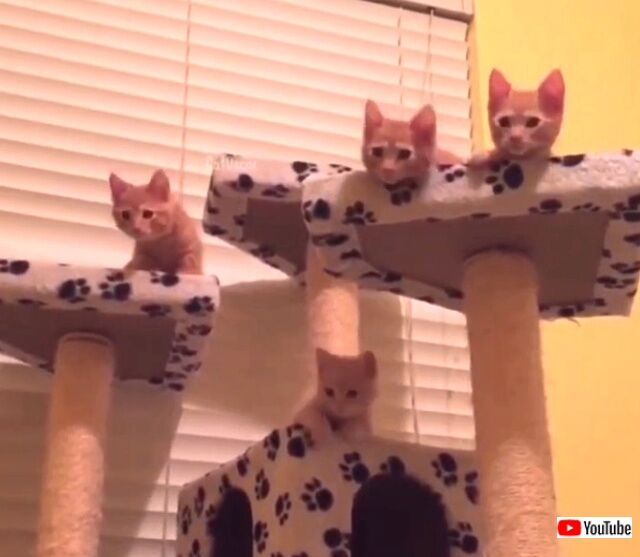funnycats7_640
