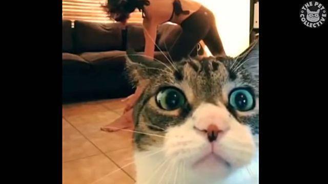 adorablecats4