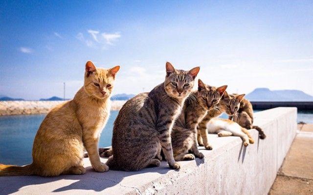 animals-about-to-drop-album-photos-110-58aefbd090ef5__700_e