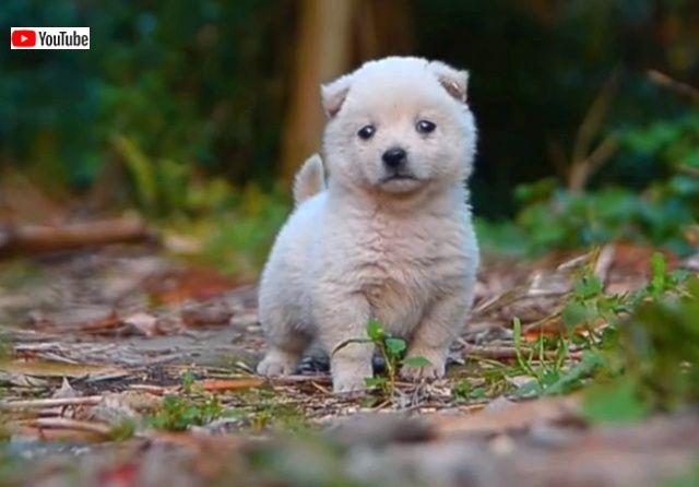 puppynchicks6_640