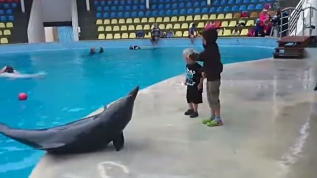 dolphinwithkid3