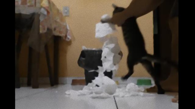 cat-3_e