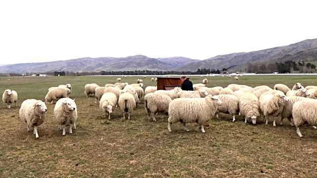 concertforthesheep4