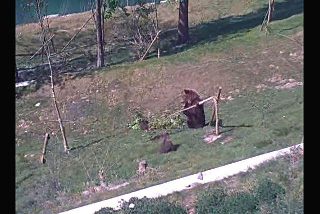 bearcub5