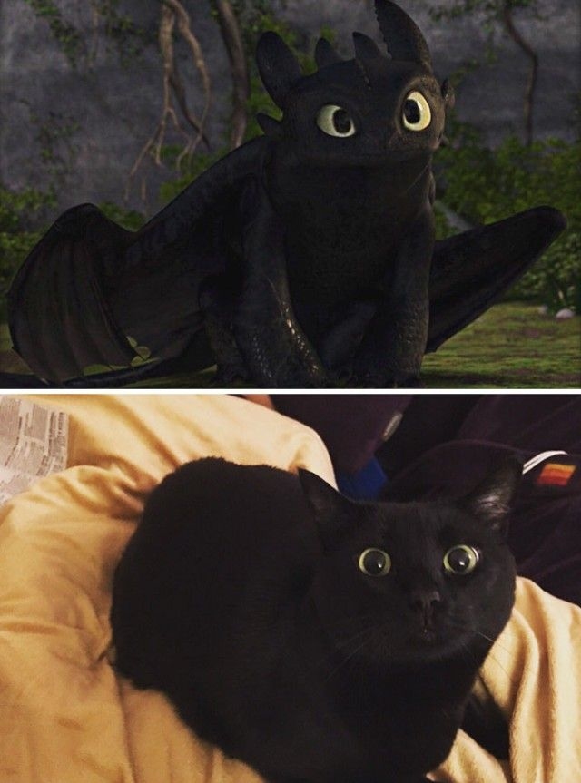 cats-toothless-lookalikes-18-57ce7f55deb1a__700_e