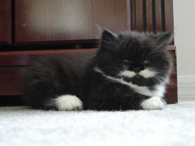 mustaches22_e