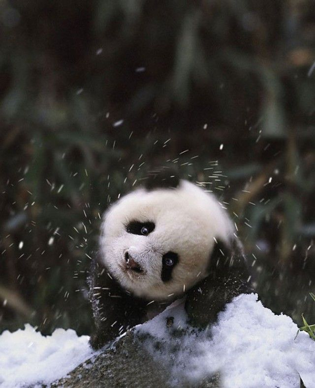 funny-animals-first-snow-cats-dogs34_e