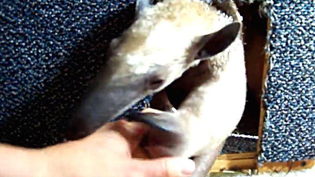 anteater5