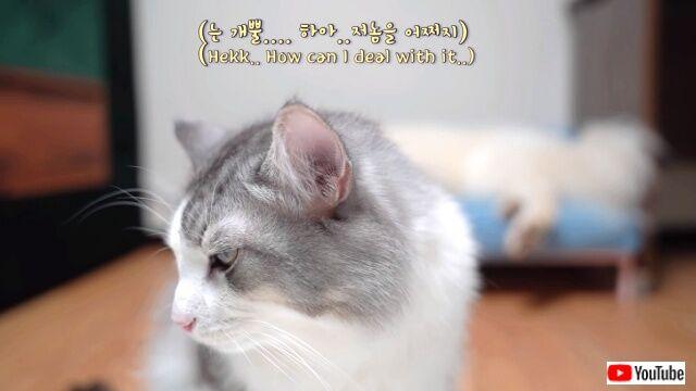 milkytookbed8_640