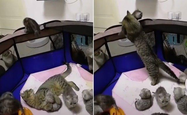 momcats1_e
