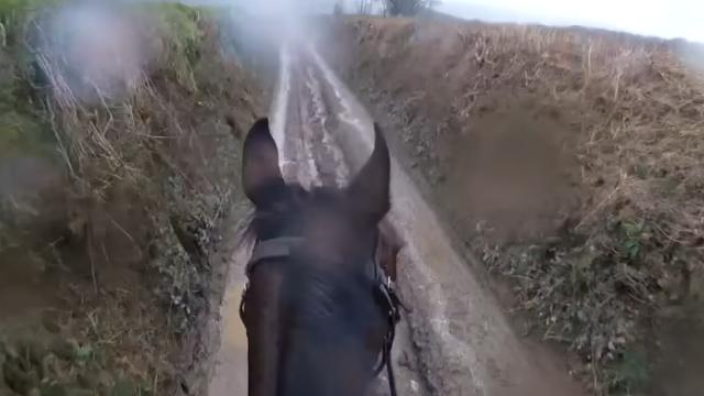 horse-3_e