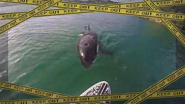 orca1-frame