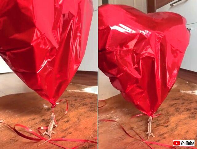 balloon4_640