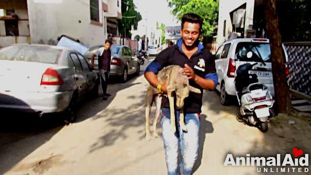 animalaid3