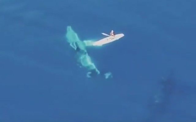 whalesnpaddleboarder3_e