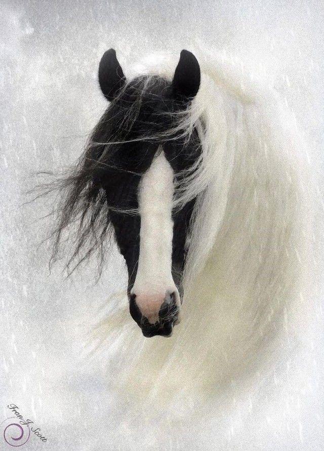 horse6_e