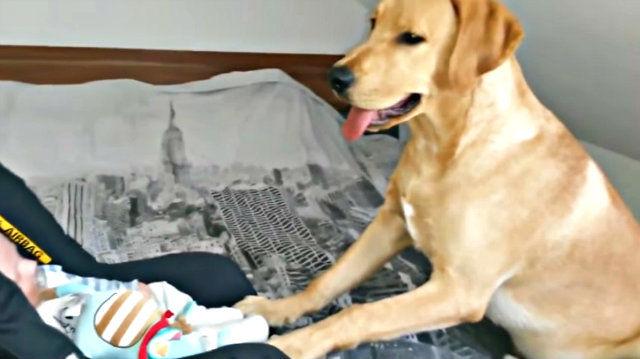 sittingdog4