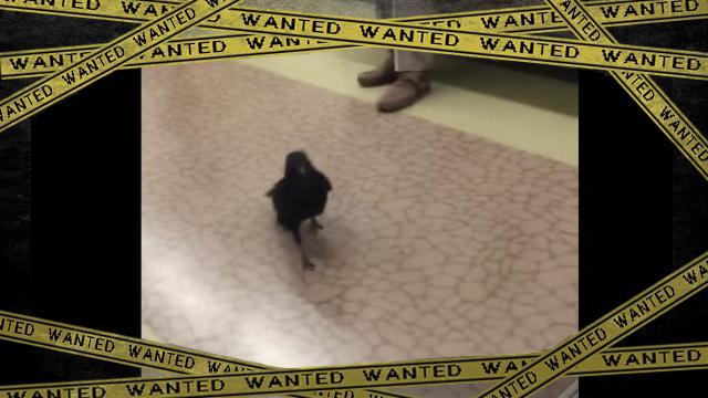 crow-f [www-frame