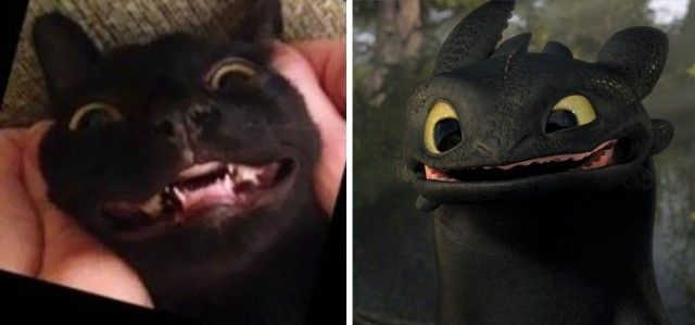 cats-toothless-lookalikes-030-57cebd9556659__700_e