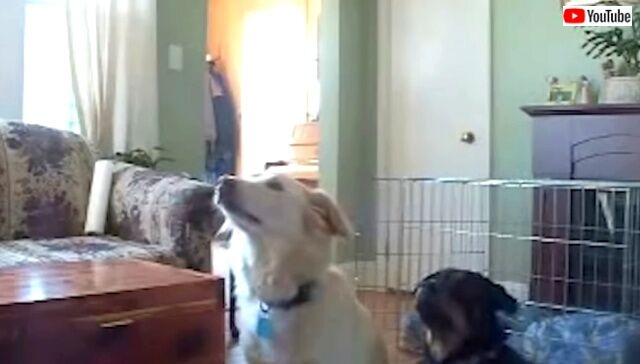 dogsawsomething2_640
