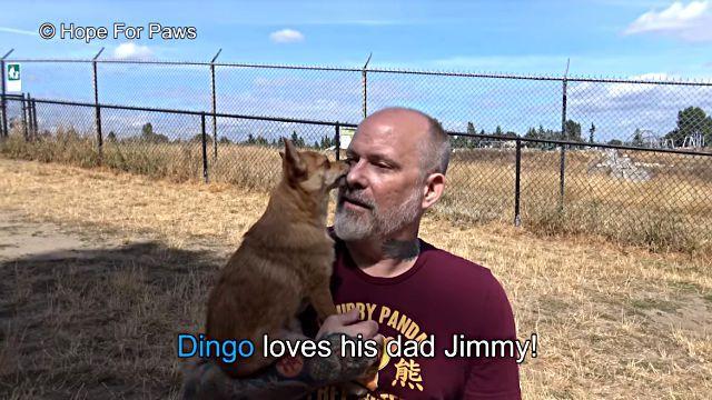 dingo9