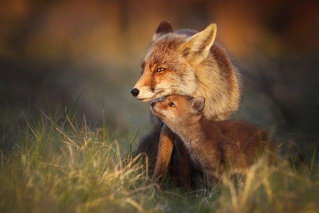 fox6_e