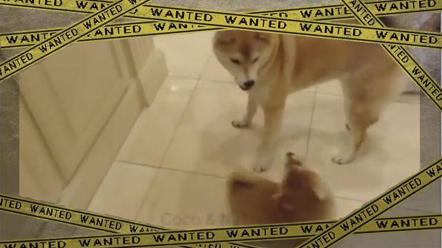dogdrill [www-frame