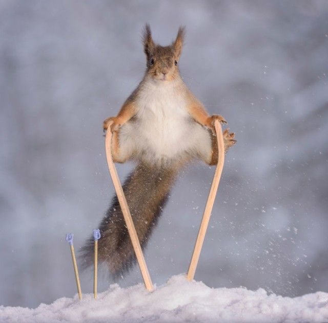 wintersportssquirrel1_e