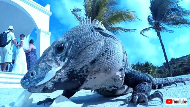 lizardwedding5_640