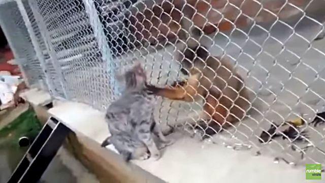 catnmonkey3