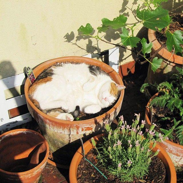 cat-plant14_e