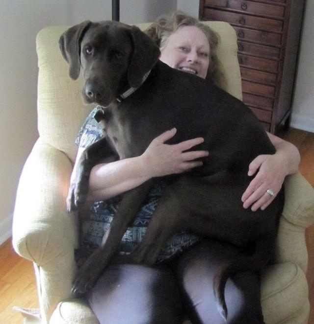 big-puppy17_e