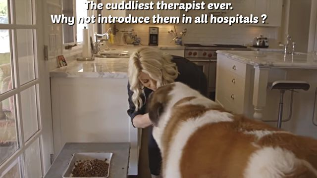 therapydog1