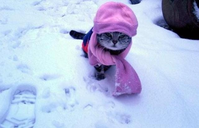 cats14ok