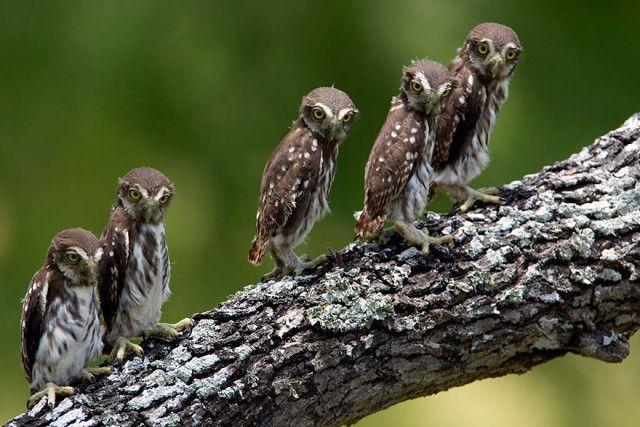 owl-photography-30__880_e