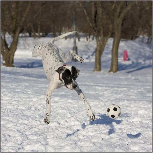 jump-15 [www.imagesplitter.net]