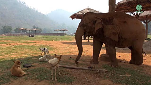 elephantndog0