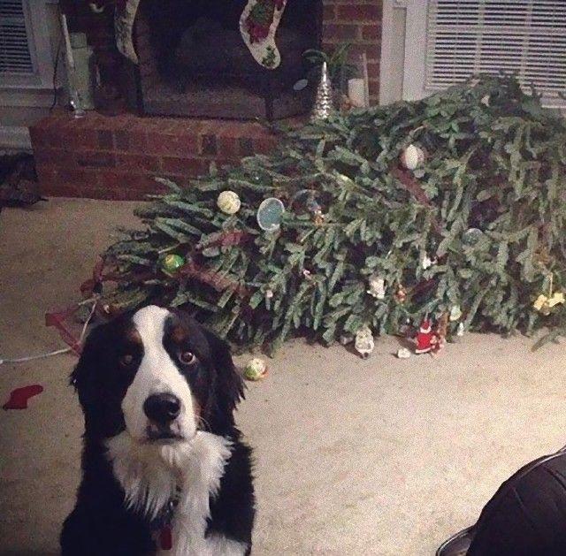 XX-animals-destroying-Christmas-1__605_e