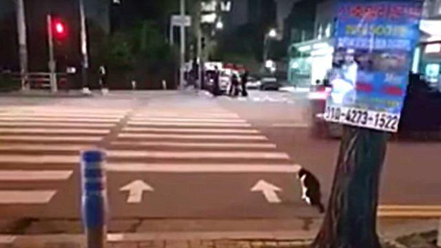 crossingcat0