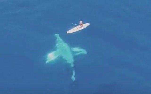 whalesnpaddleboarder0_e