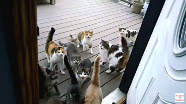 everydaycats2