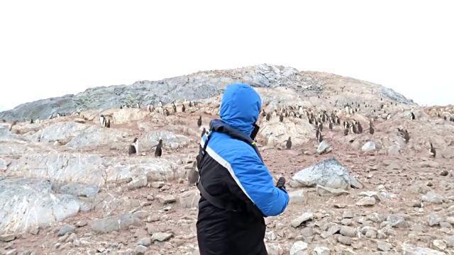 penguinshateopera3