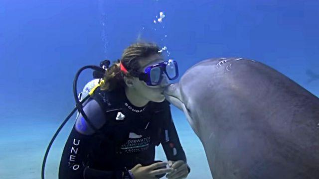 dolphinshark0