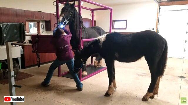 horsedentist2_640