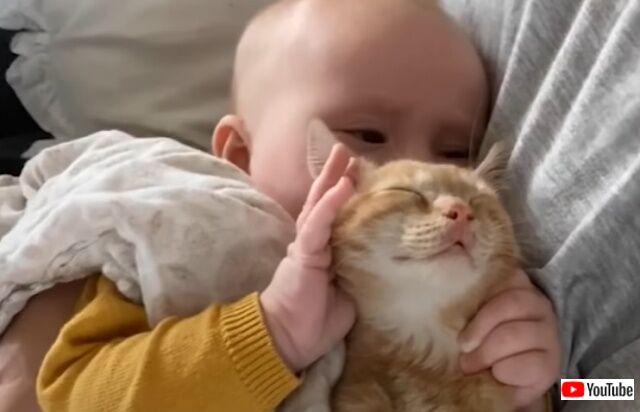 子猫と赤ちゃん「お兄ちゃん大好き!」「妹カワイイ!」家族の絆で結ばれたふたりのイチャコラっぷりがたまらない